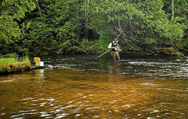 864 best fly fishing images on pinterest fishing fly for Fly fishing wisconsin