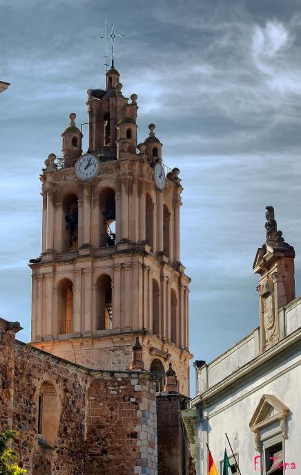 La torre de la iglesia de Nuestra Señora de la Purificación alberga una importante colonia de Cernícalo Primilla por lo que es una de nuestras zonas ZEPA urbanas.