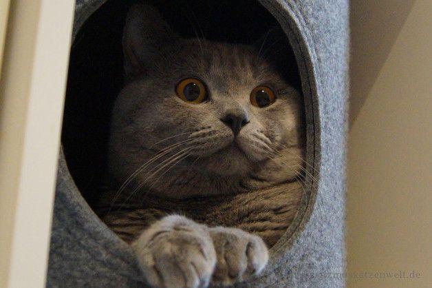 """Stabile runde Katzenhöhle aus Filz  """"Neue verbesserte Version""""  Farbe: hellgrau  Größe S  (Höhe x Durchmesser) = 32cm x 32cm    Größe M  (Höhe x Durchmesser) = 32cm x 37cm   Größe L ..."""