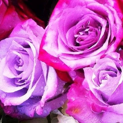 Paarse rozen.