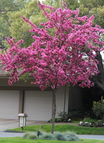 1000 images about trees shrubs roses on pinterest for Dwarf ornamental trees for zone 4