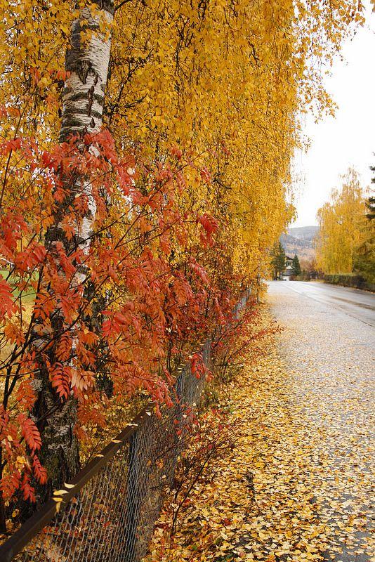 Narajas y amarilos, los colores del Otoño