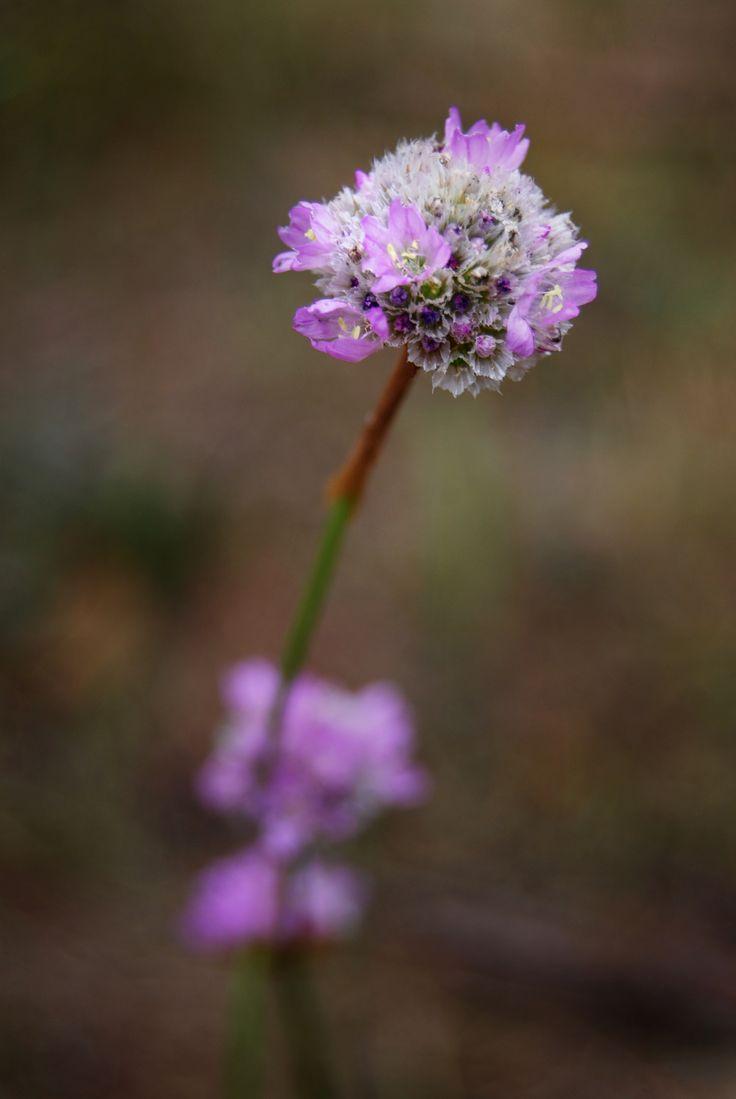 #makro #macro #makrophotography #summer #flower #violet #lila