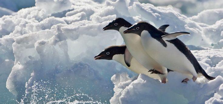 Джонатан и Анджела Скотт (Jonathan и Angela Scott) — знаменитые фотографы дикой природы