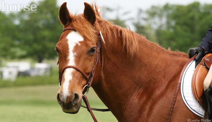 Researchers have found a correlation between whorl direction and how horses react to scary stimuli.