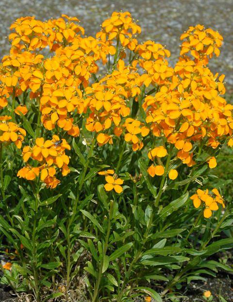 images  wallflower  pinterest