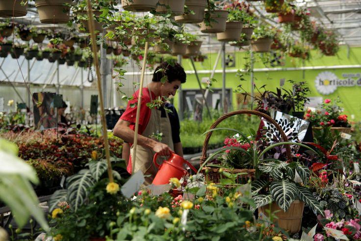 mise en pratique horticulture en pépinière