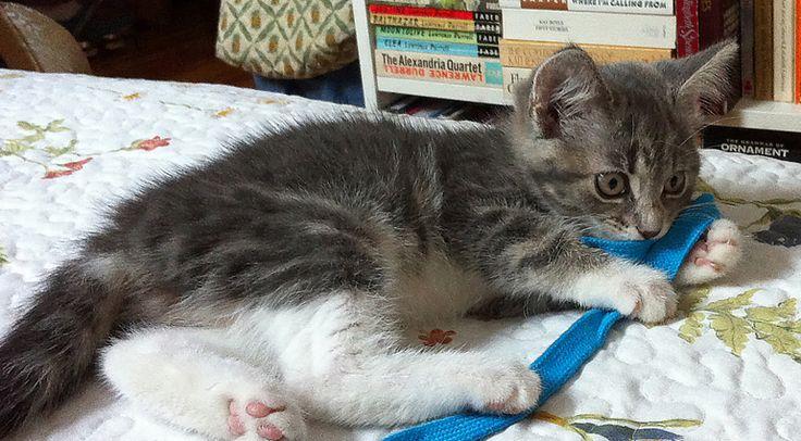 17 Best Ideas About Cat Gate On Pinterest Baby Door Cat
