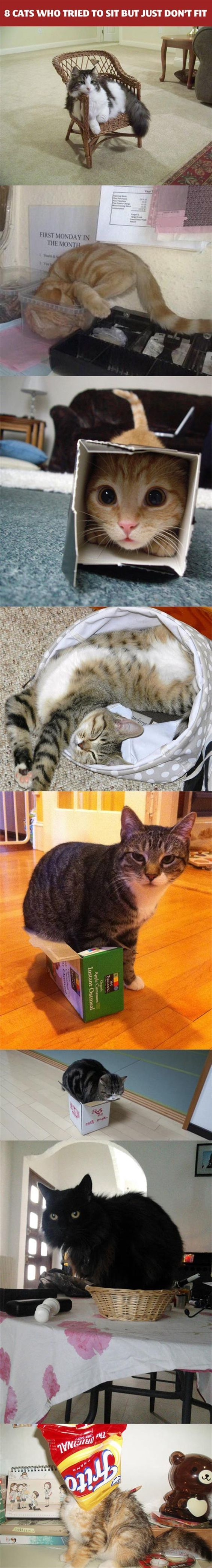 8 Cats Who Tried to Sit But Just Don't Fit - MyFunnyPalace