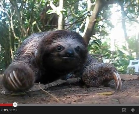 Recorded Footage of a Sloth Attack ...the soundtrack makes ...