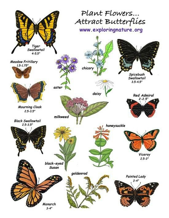 Plant flowers to attract butterflies