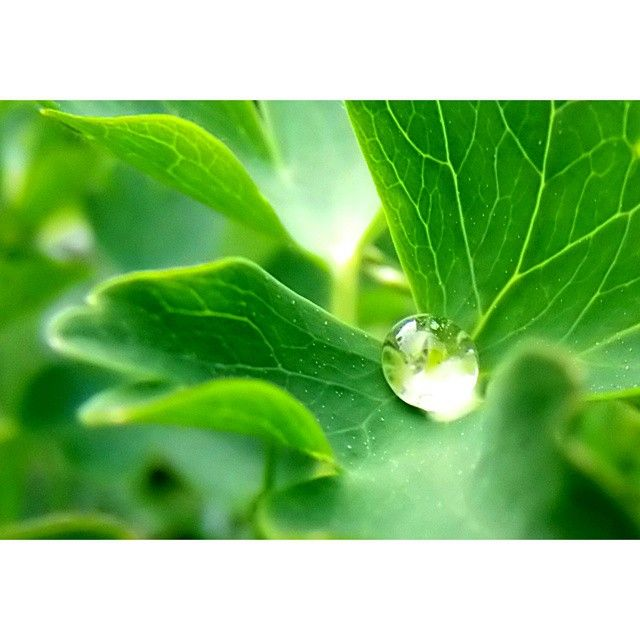 #nature #naturelovers #green#plant #water #kropla #wody #beautiful #nice#macro#photoshoot #photography#fun#instagood@instanature_789#lubiepolske