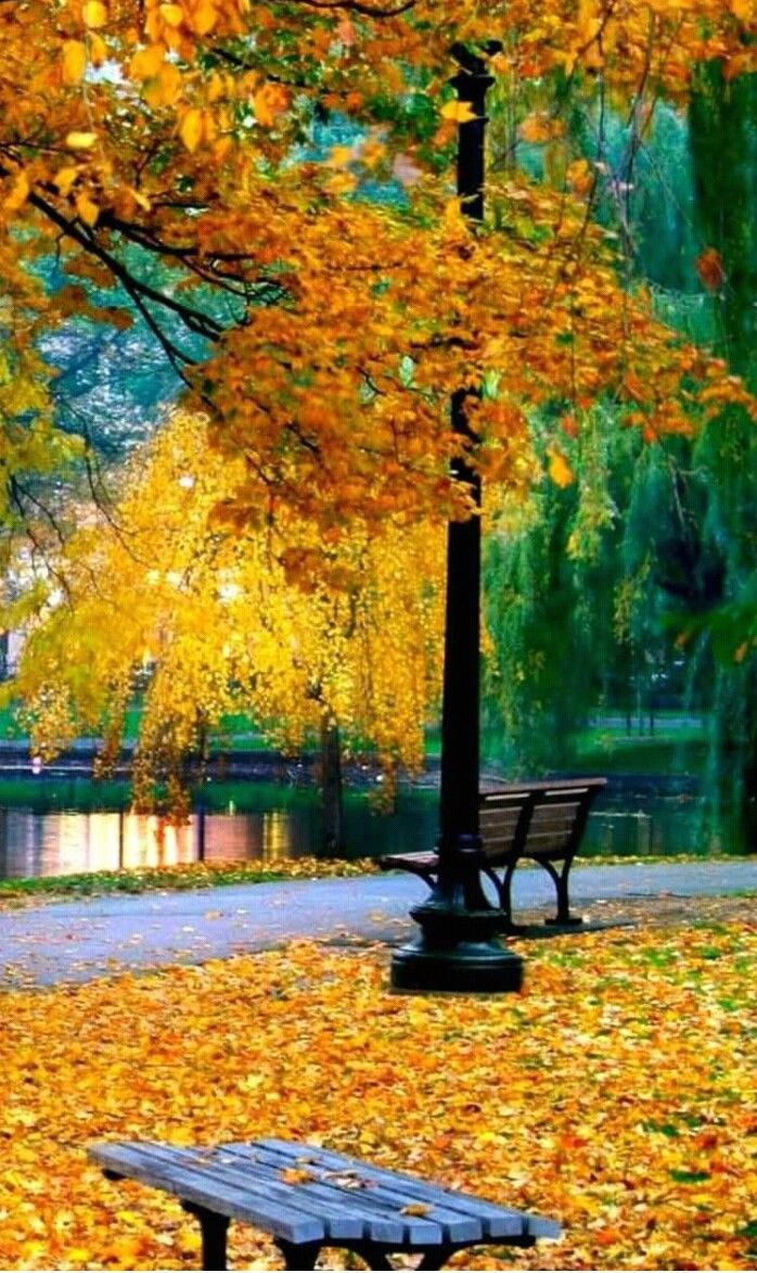 Pin By Cynthia Herron On L Autunno Colora Autumn Scenery Scenery Beautiful Landscapes