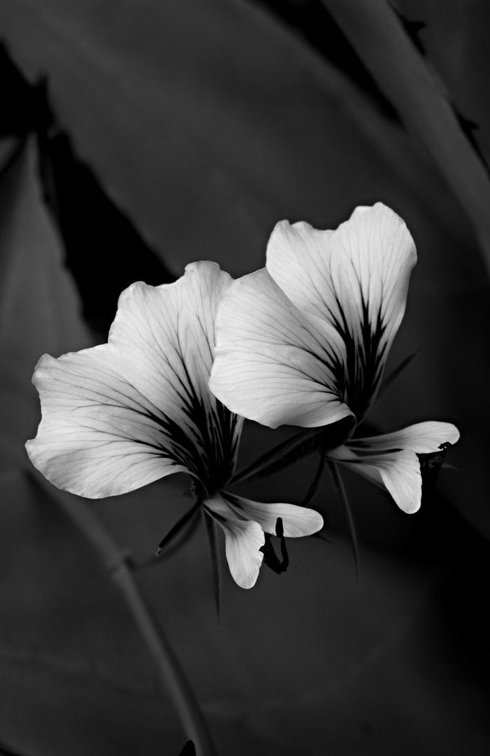 fleurs noir et blanche. Black Bedroom Furniture Sets. Home Design Ideas