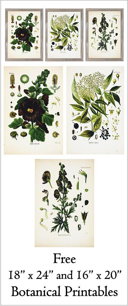 "Free 18"" x 24"" and 16"" x 20"" Botanical Printables- Series 1.  www.simplymadebyrebecca.wordpress.com"