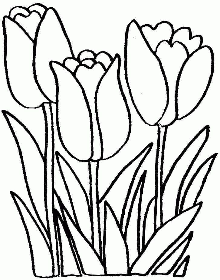 Tulip Flowers Coloring Sheets Free For Preschool 20598 ...