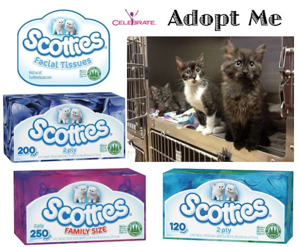 Scotties Facial Tissues Partners with Animal Rescue League to Sponsor Cat Adoptions