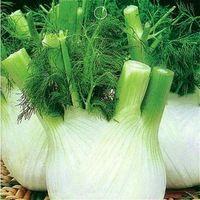 Европа фенхеля луковицы Органические овощи Семена 100 единиц / серия благоухающего сада Салат Семена растений Вкусные Рождество