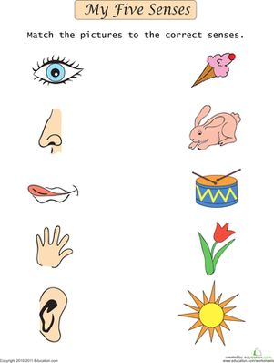 Preschool The 5 Senses Worksheets: My Five Senses Match-Up Worksheet