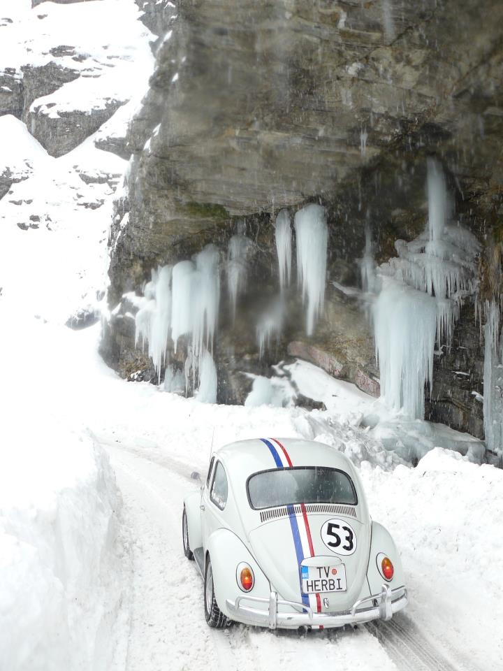 chilly Herbie #vw