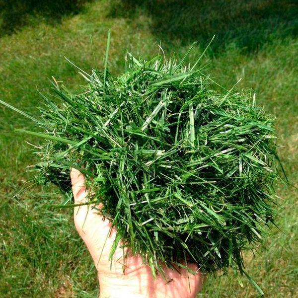этом трава скошена картинка можно полной