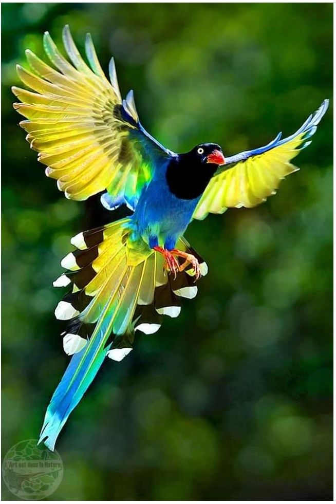 That Bird Is Pure Artwork Birds Animals Beautiful Animals