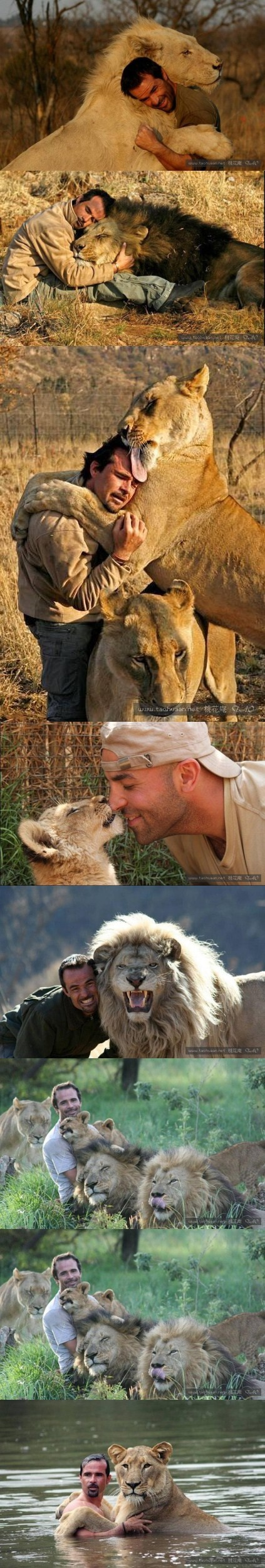 "South African man had intimate contact with the group of lion , is known as the ""lion speakers"".Whether it be human or a lion, we are all animals on the earth, and we look forward to the emergence of the more ""lion speakers"" , we should learn from him"