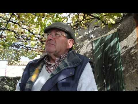 ▶ [Proyecto BIOURB] Pared vegetal - YouTube