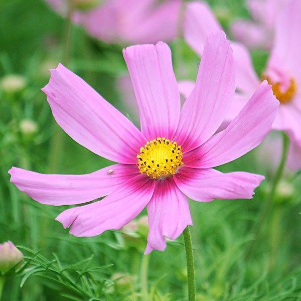 Schmuckkörbchen 'Pink Blush'