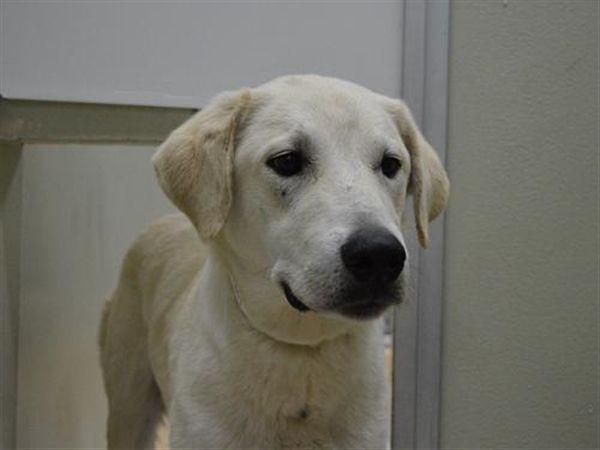 Joey Oregon Humane Society Humane Society Pet Dogs Pet Adoption