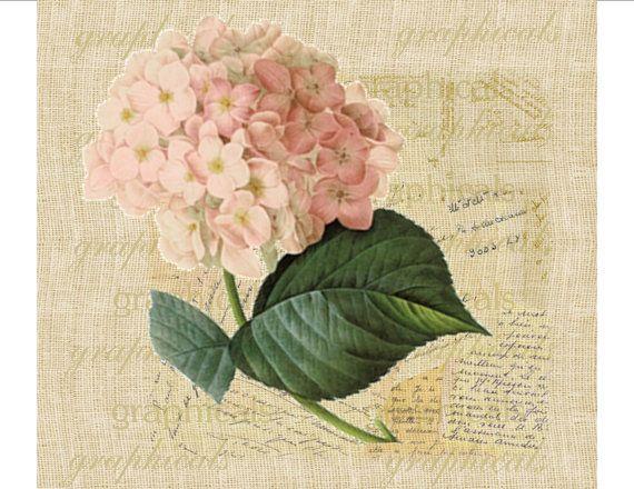 Vintage pink hydrangea French ephemera
