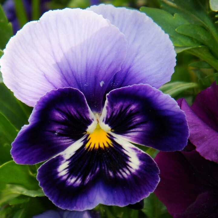 https://i.pinimg.com/736x/b4/fd/60/b4fd60f1f3c0937647e715fcdc98b41d--colorful-flowers-purple-flowers.jpg