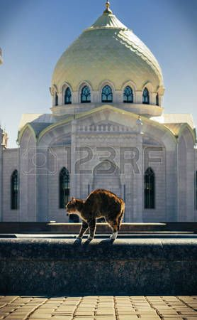 Angry cat arched his back on the curb of the fountain in the background of the White Mosque, Bolgar, tatarstan