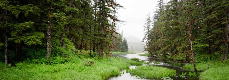 Tongass National Forest | Protect Alaska's Temperate Rainforest | NRDC's Save BioGems