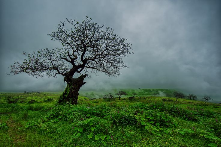 From Salalah With Love - Foggy tree standing at the top of Atin Mountain in Salalah / Oman