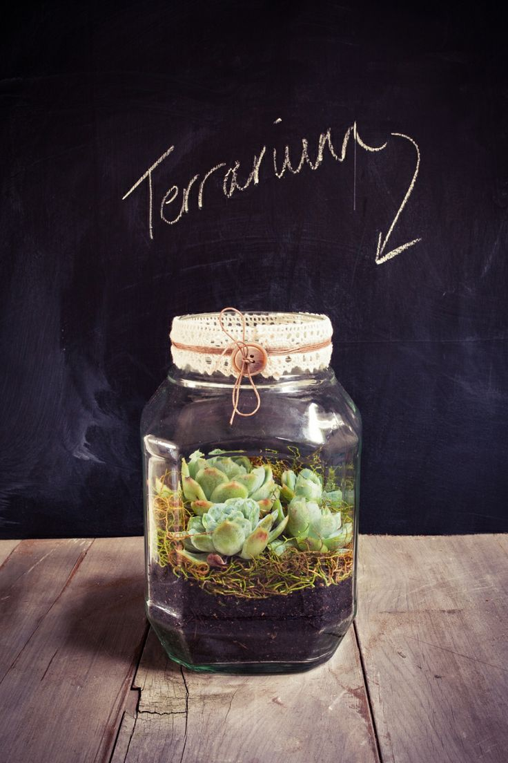 Terrarium in front of chalk wall
