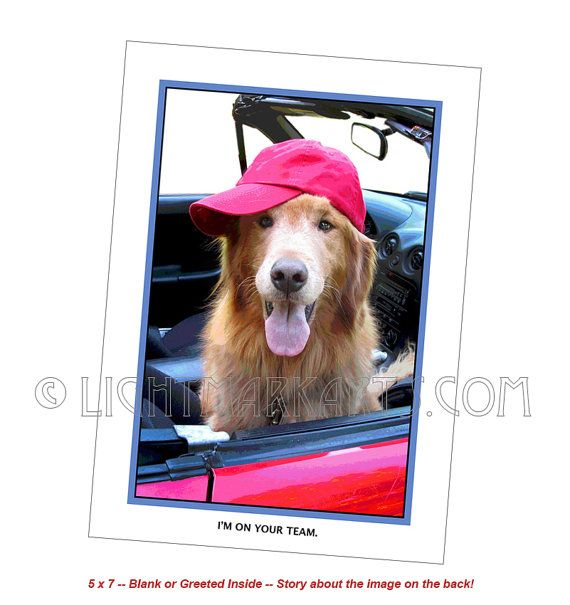 "Funny dog card, Pets , Golden retriever, Friendship, Encouragement, Dogs in Cars, Greeting Card, ""I'm on your Team!"""