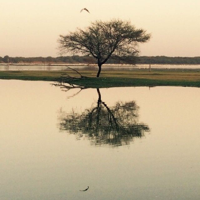 Thol Bird Sanctuary in Mahesāna, Gujarāt