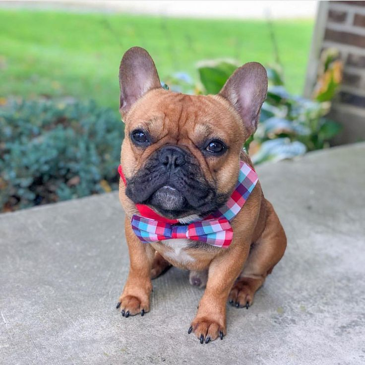 Training Dog Obedience Using Hand Signals Животные