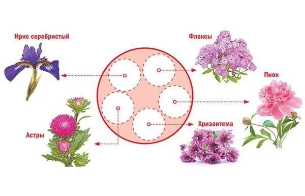 Схема круглой клумбы непрерывного цветения