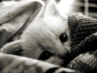 Snuggle!: Photos Galleries, Kitty Cat, Sleepy Kitty, Kitty Kat, Baby Animal, Cuddling Buddy, Funny Pet, White Cat, Cat Photos