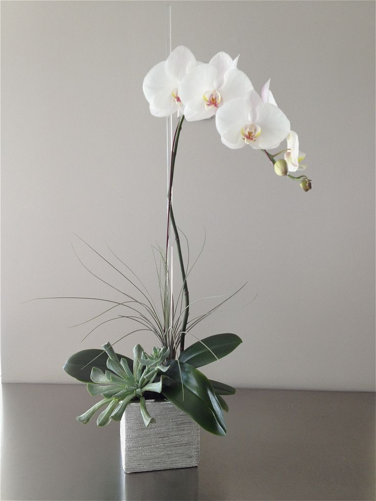The Silver Orchid - a classic white orchid plant with tropical and succulent accents in a silver ceramic.