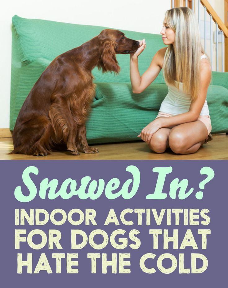 Snowed In? Indoor Activities For Dogs That Hate The Cold!