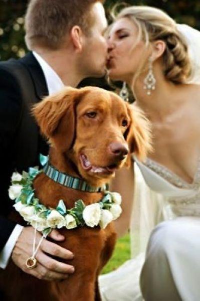 Hunde sind die besten Ringträger!