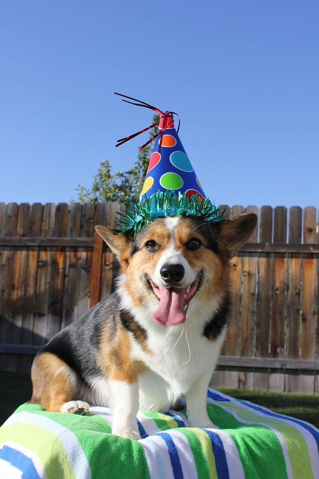 Happy 2nd birthday Zero!