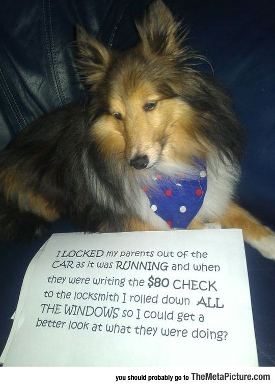 Best Case Of Dog Shaming They shouldn't have Left the dog in the car