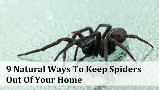 9 Natural Ways To Keep Spiders Out Of Your Home - the best one on here is 'clean your house regularly' afterall, the spiders are there to eat something and that something is usually insects that will have a population boom without spiders or regular cleaning.
