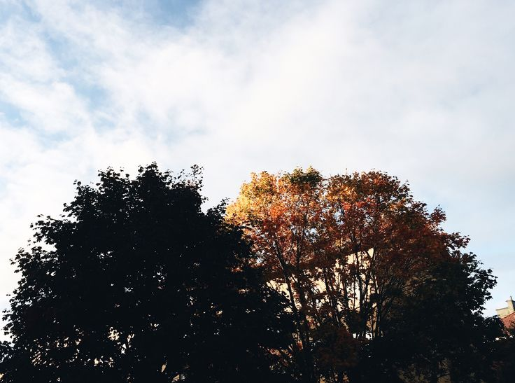 the week that was saved by nature + music // 40 (plus october's playlist!)
