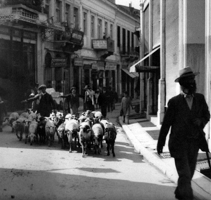 Τι γυρεύουν τα πρόβατα στην Πλάκα και το Κολωνάκι; Η σκληρή κόντρα τσοπάνηδων και περιβολάρηδων στην Αθήνα του 1900 - ΜΗΧΑΝΗ ΤΟΥ ΧΡΟΝΟΥ