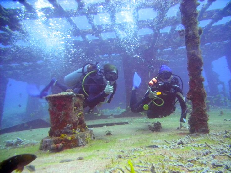 Diving in Cancun in a Shipwreck. Amazing Diving #Cancun #Diving